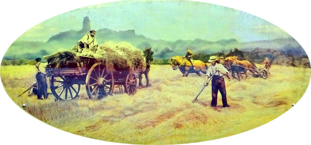 Hay being collected from the field where it had been spread out to dry, early 20th century