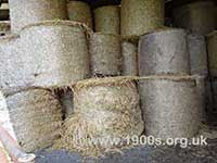 Rolls of fresh, unfermented hay for immediate use