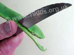 Cutting the sides off a runner bean to remove its strings